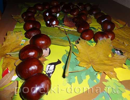 gusenica kashtany 1