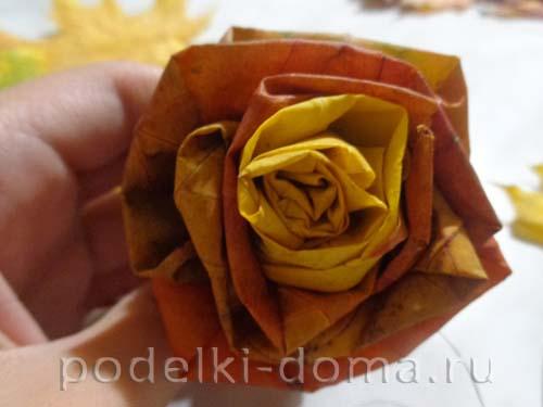 roza iz listyev klena