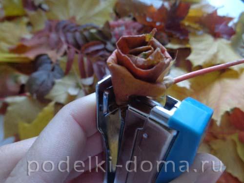 rozy iz klenovyh listyev3