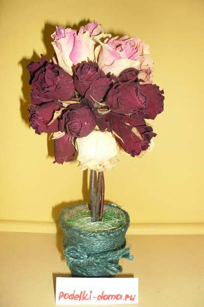 topiariy rozy