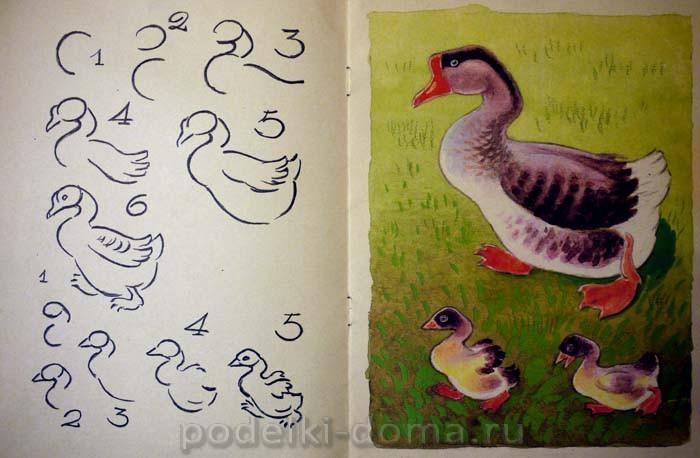 Как нарисовать гуся