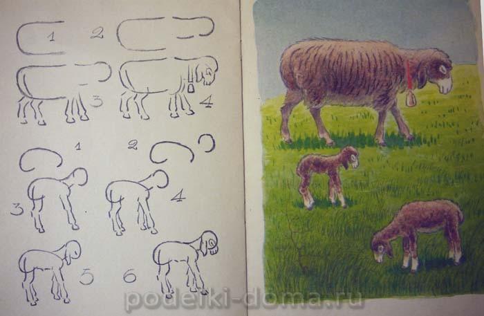 Как нарисовать овцу и ягненка