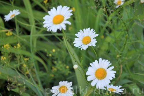 цветы куклы 06