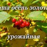 """Конкурс """"Наша осень золотая, урожайная"""""""
