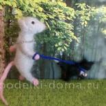 Мышь и его Васька