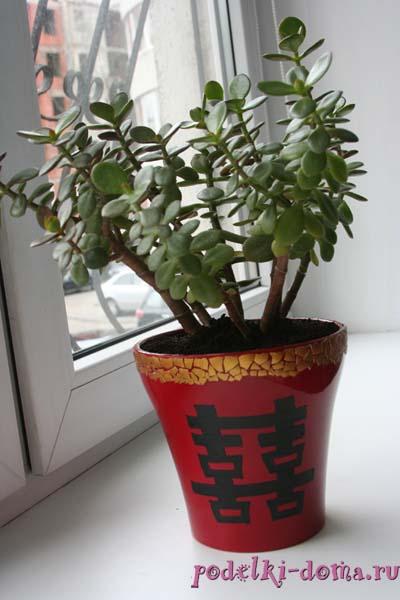 cvety fenshuy