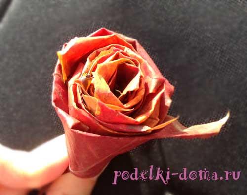 roza iz listev3