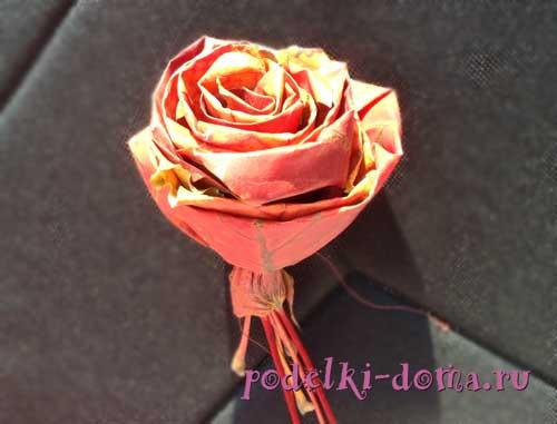 roza iz listev4