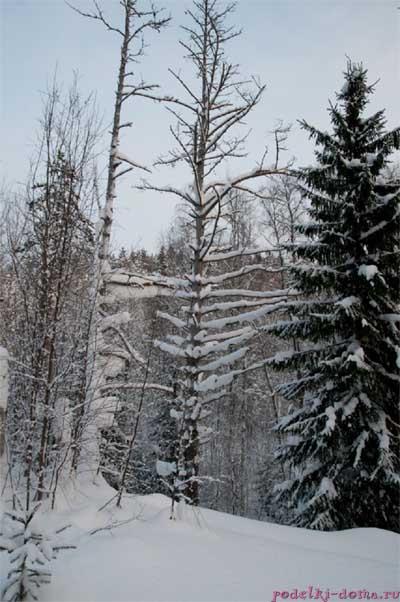 4 Karelia