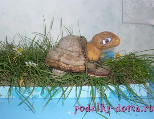 черепаха из патиссона поделка фото
