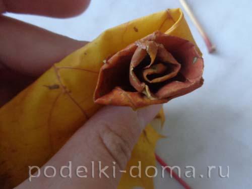 rozy iz klenovyh listyev5