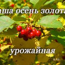 Конкурс «Наша осень золотая, урожайная»