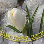 Поздравляем победителей конкурса «Навстречу весне»!