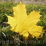 Итоги конкурса «Осенний калейдоскоп»
